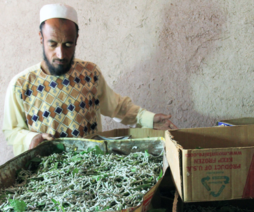 Silk rearing vocational training