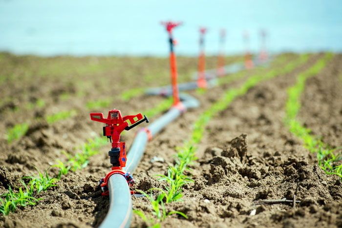 Greenhouse drip irrigation establishment