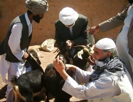 Support to Vulnerable Families by goat distribution
