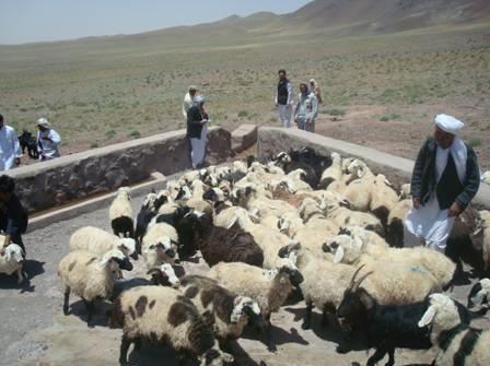 Anti exo-parasite bath for livestock
